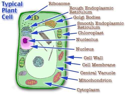 PlantCellParts