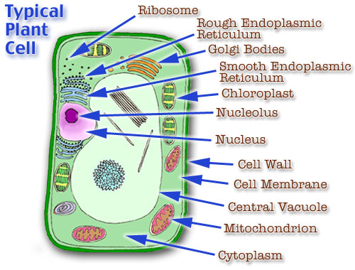 10 amazing facts about plant cells tutor pace without plants earth would have lost one of the main contributors of food for the living beings plants have cells which have many amazing facts ccuart Choice Image