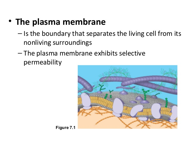 membrane-function-and-structure-and-cell-transport